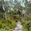 Tasmanie139A.jpg