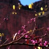 28_deer_creek_redbud_tree.jpg